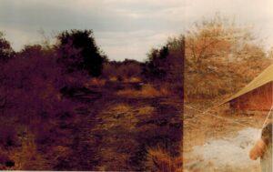 Dubbele belichting: Bavianen en onze tent