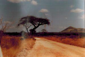 De weg door het park