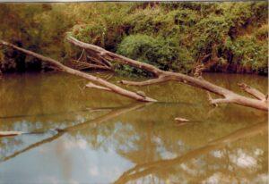 Schildpad op een boomstam