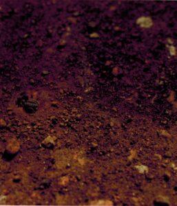 Een spin, of is het een mierenleeuw?