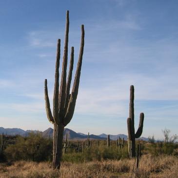 Arizona – November 2003