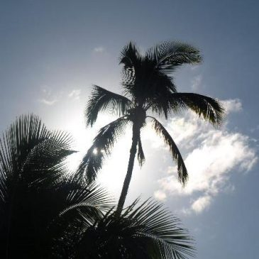 Maui – December 2008