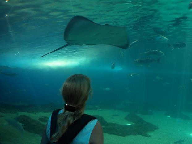 Aquarium op Maui