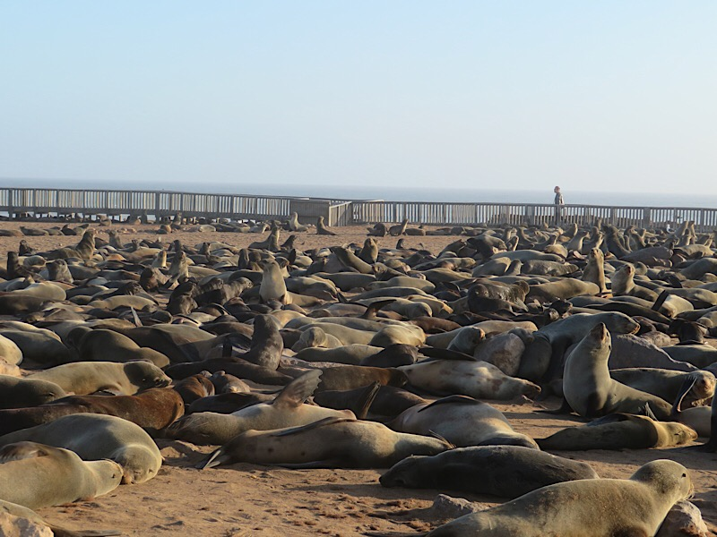 Africa: Cape Cross seals