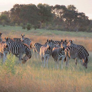 Okavango Delta, canoes and bush walk