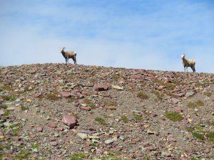 Berggeiten in Glacier NP