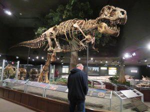 T-Rex In Museum of the Rockies