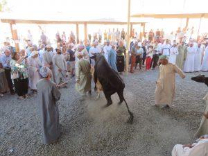 Veemarkt in Nizwa, Oman