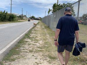 Wandelen met een zwervershond